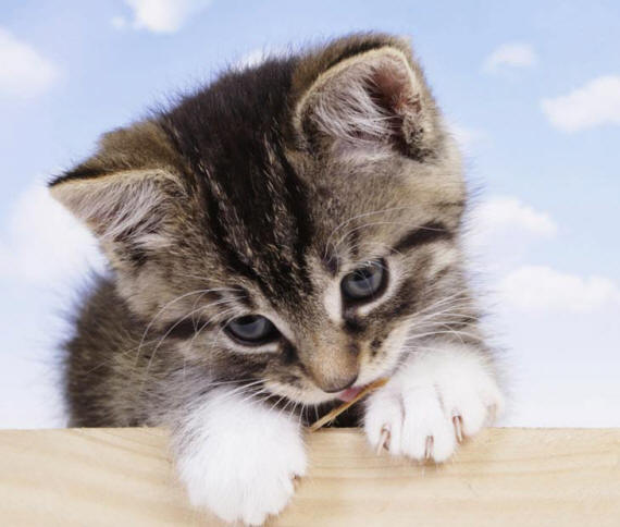 Картинки и фото кошек котят и котов