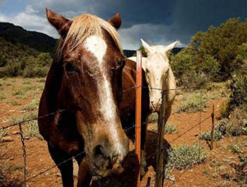 Картинки красивых лошадок