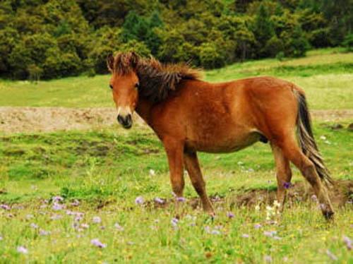 Рыжий конь на траве кажется