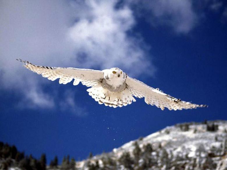 Картинки сов и филинов, картинки с названиями этих птиц вертеть