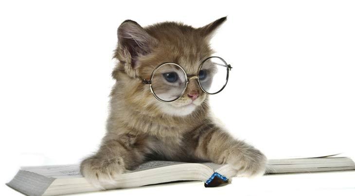 Фото котов британской