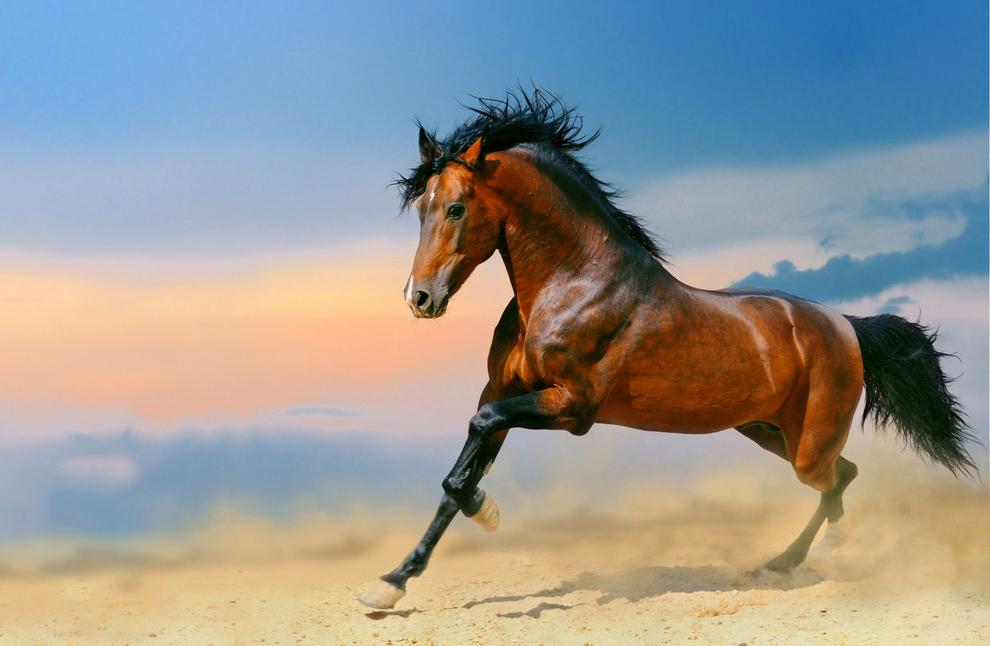 Это красивое фото лошади украсит вашу