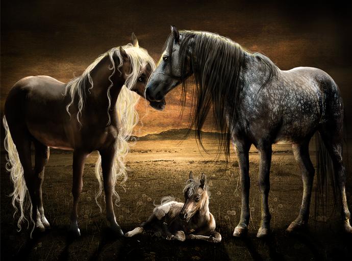 Фото красивые коней