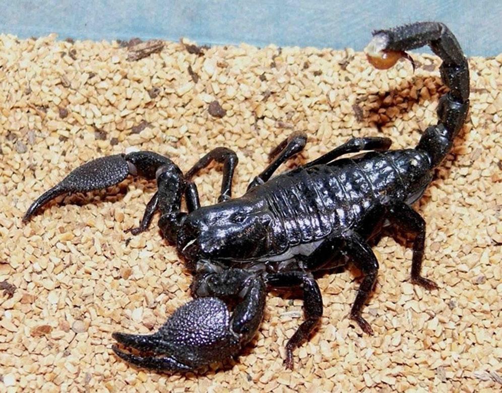Скорпионы фото картинки