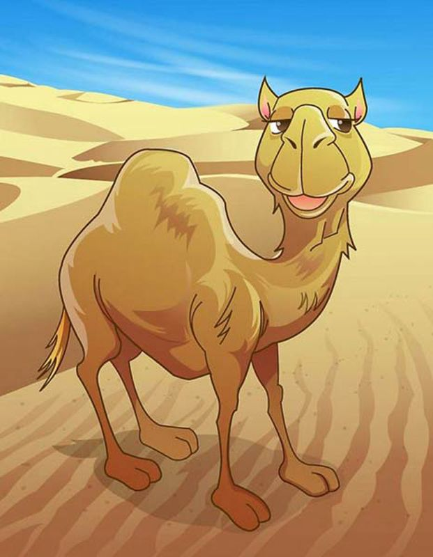 Интересные изображения верблюдов и